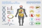人体构造图矢量