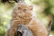 Kittens Free Screensaver
