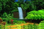 Millaa Millaa WaterfallLOGO
