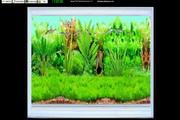 Amago Fish School Screensaver
