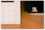 Cat Screensaver EV