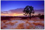 Hot Deserts Free ScreensaverLOGO