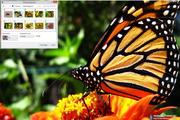 Monarch Butterfly Windows 7 Theme