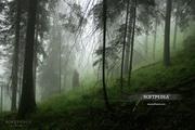Animated Rain WallpaperLOGO