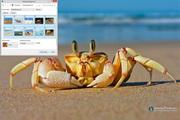 Crab Windows 7 Theme