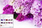 Lilac Flowers Windows 7 Theme