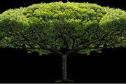 透明樹木圖片