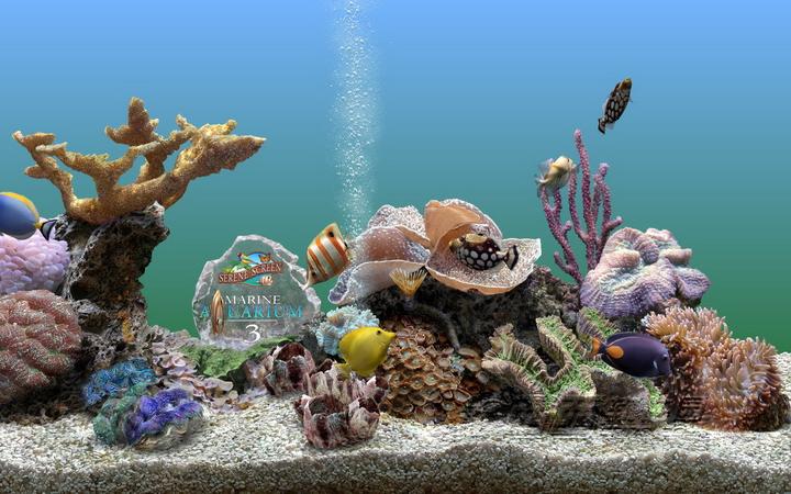 热带鱼屏保截图1