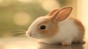 兔子桌面專區