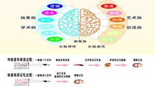 全脑速读记忆专题