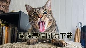 猫猫表情图标下载
