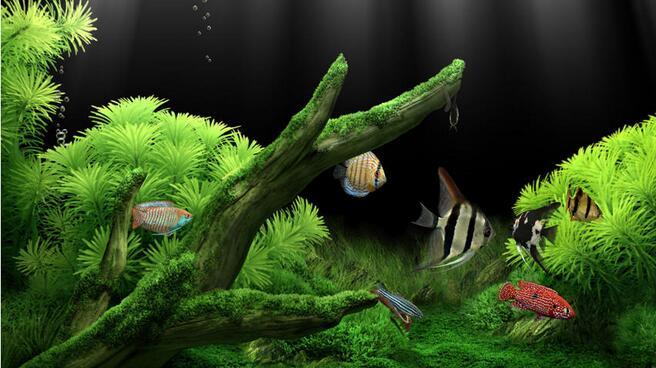 Aquarium截图