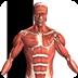 虚拟人体解剖