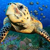Popar海底世界