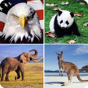 看图猜动物