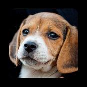 小狗的品种LOGO