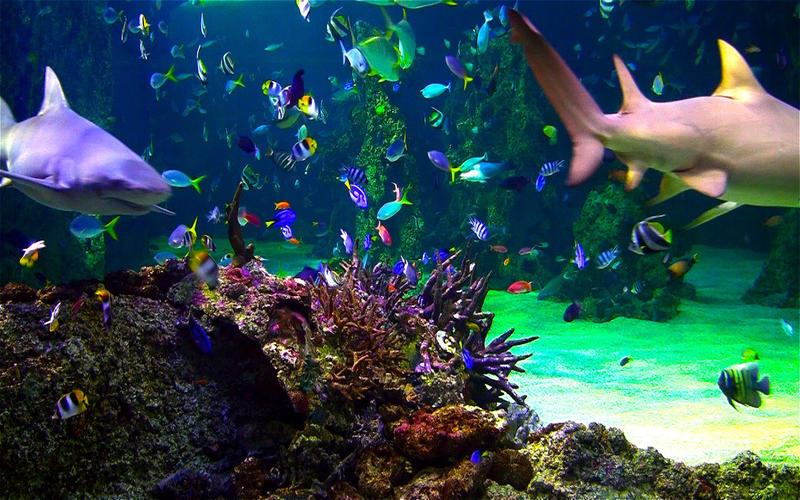 水族馆HD+: 海洋屏保截图4