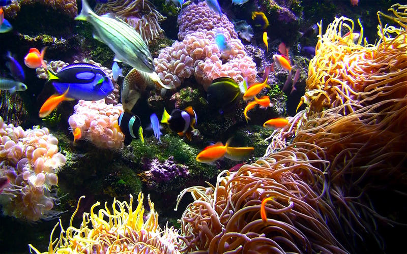 水族馆HD+: 海洋屏保截图5