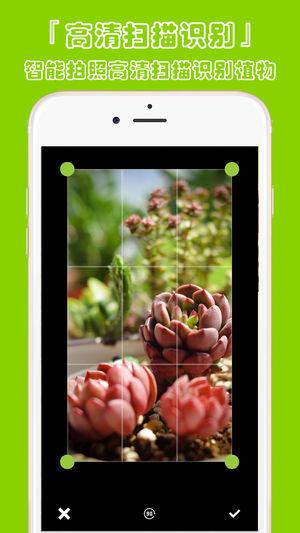 植物识别截图2