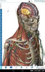 人体解剖学图谱:Human Anatomy Atlas截图1