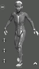 3D漫画姿势工具:Manga Pose Tool 3D