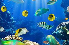 海底世界Aquanoid