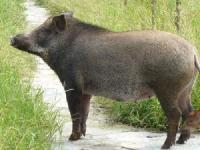 中研特种动物饲料配方系统