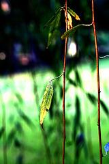 楊柳園博客Willowyard