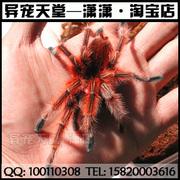 网店蜘蛛LOGO