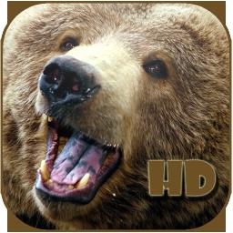 Bear Screen Savers